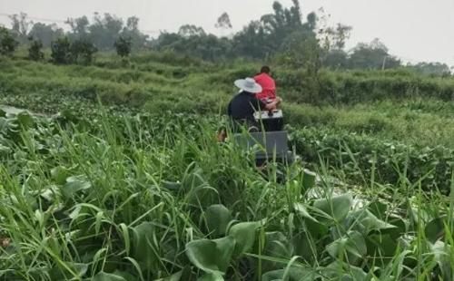 永川陈食河道清淤作业